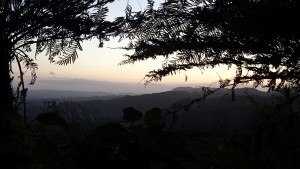 the last view before total darkness in the forest on the way up to Tamahunga